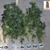Torricella Sicura: scovata serra di Marijuana, arrestati due uomini