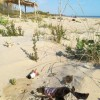 Roseto: vandali in azione nella riserva Borsacchio