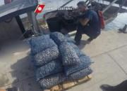 La Guardia Costiera ferma un peschereccio con un carico di vongole occultato
